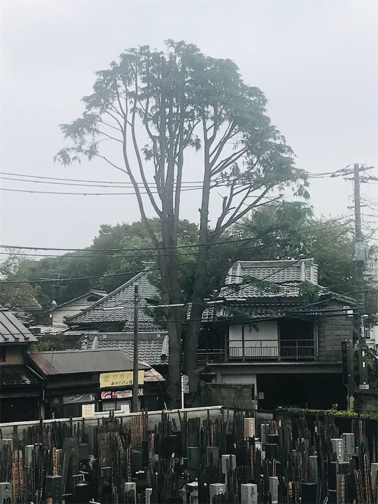 f:id:TokuheiKumagai:20211012165638j:image