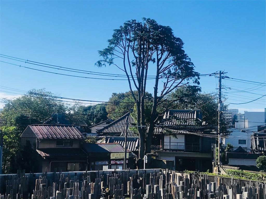 f:id:TokuheiKumagai:20211020175151j:image