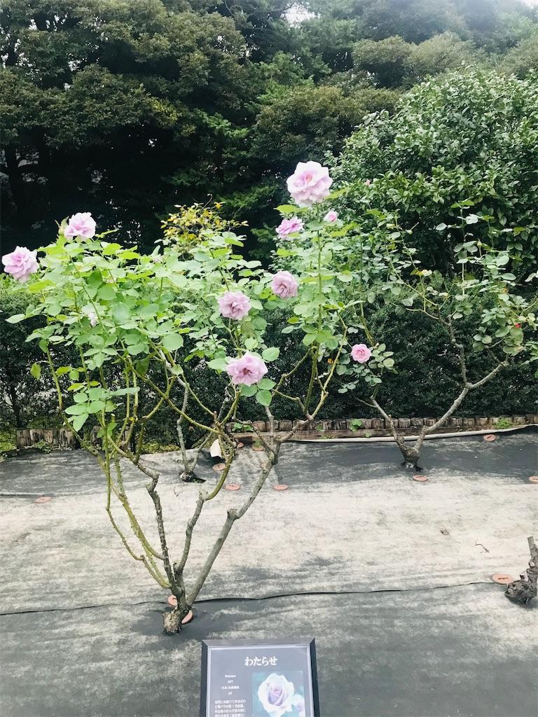 f:id:TokuheiKumagai:20211021195633j:image