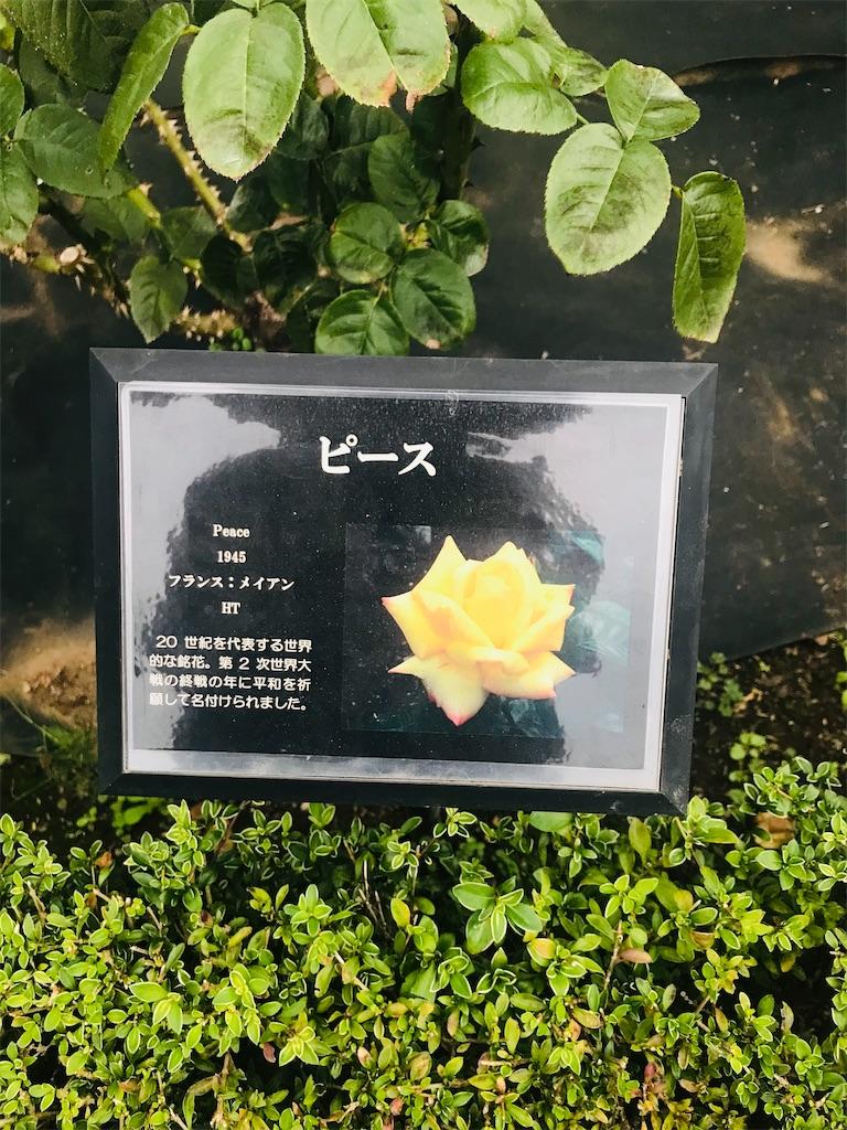 f:id:TokuheiKumagai:20211021195639j:image