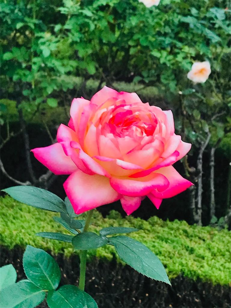 f:id:TokuheiKumagai:20211021201151j:image