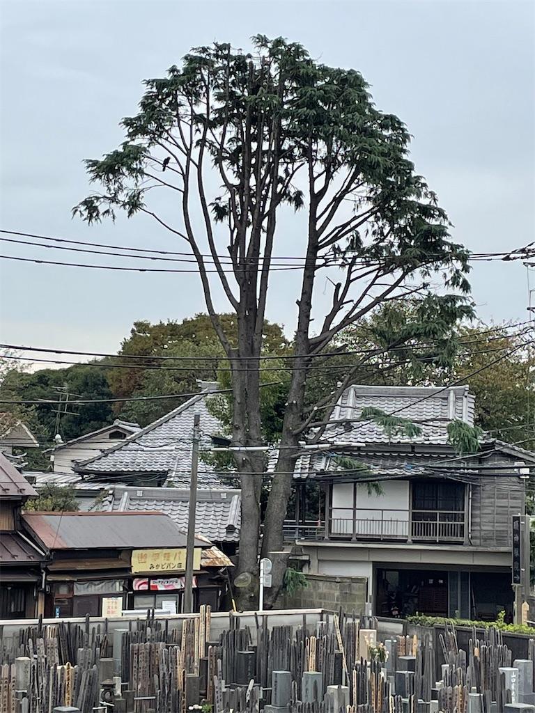 f:id:TokuheiKumagai:20211025194431j:image