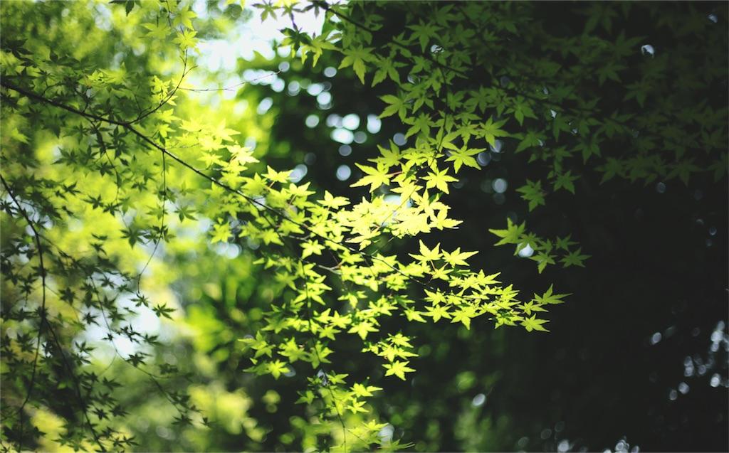 f:id:Tokyo-hitsumabushi:20160611235334j:image