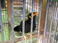 [Talking][Bird]