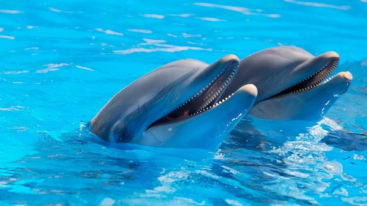 イルカとプール画像