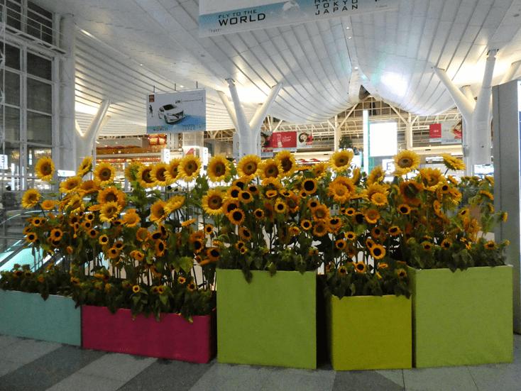 hanedaflower