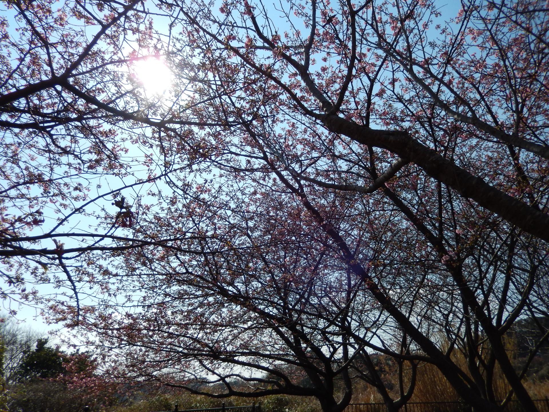 f:id:ToshUeno:20150215125255j:plain