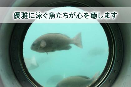f:id:ToshUeno:20151018001127j:plain