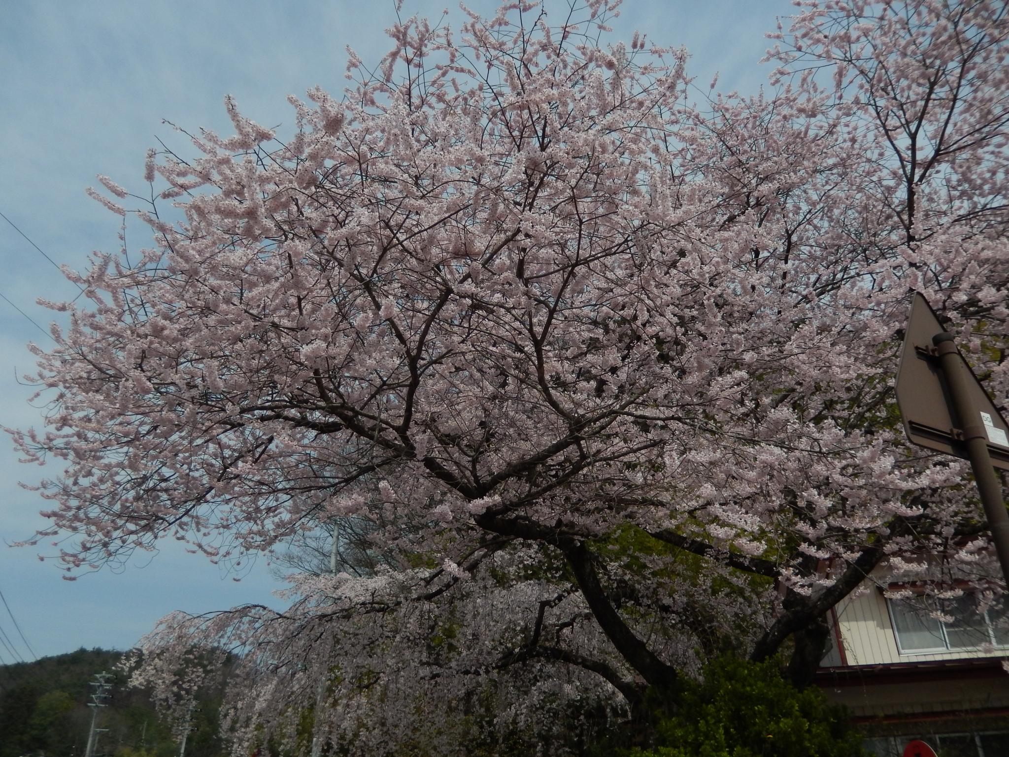 f:id:ToshUeno:20160409105750j:plain