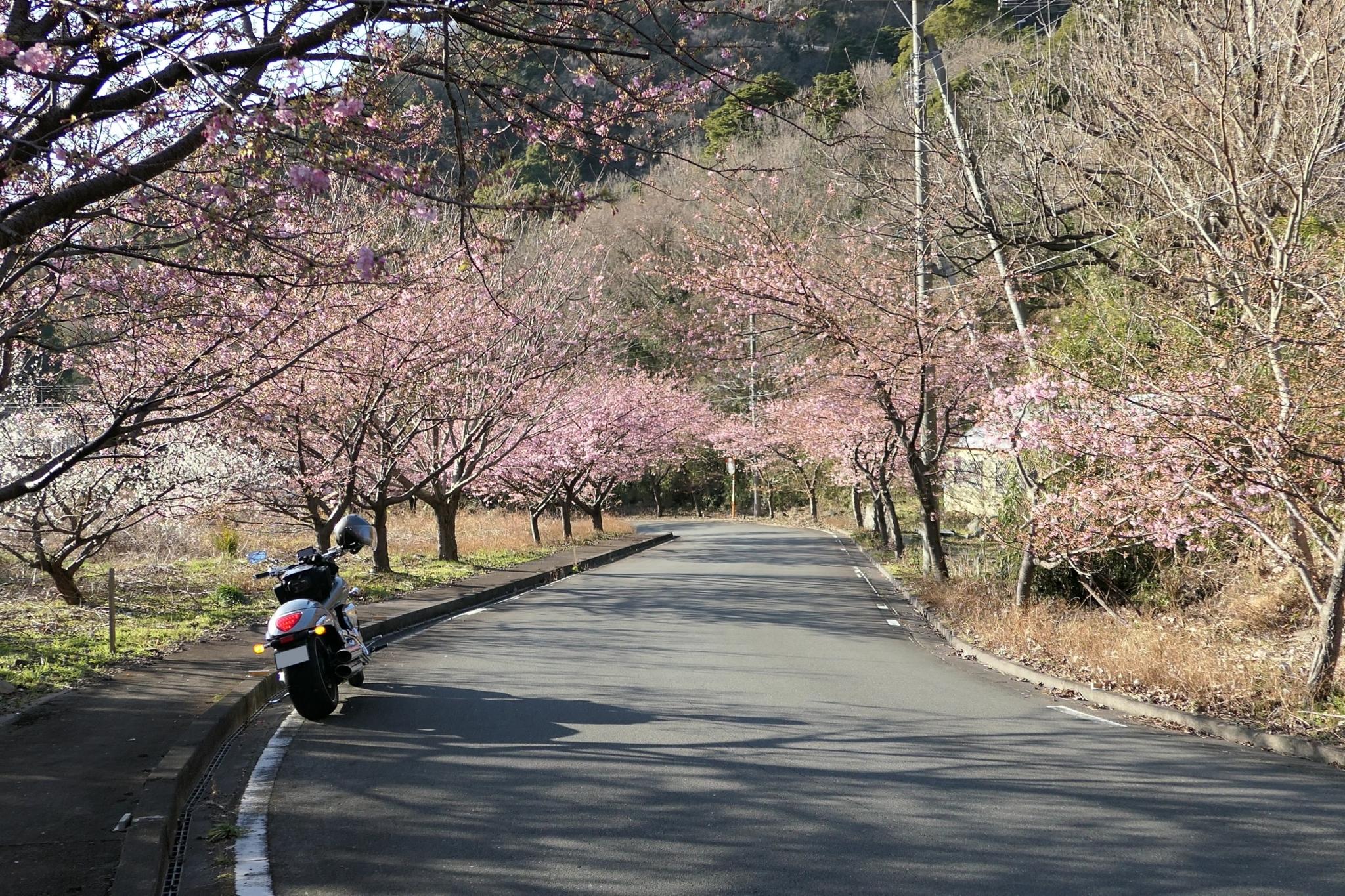 f:id:ToshUeno:20170204152420j:plain