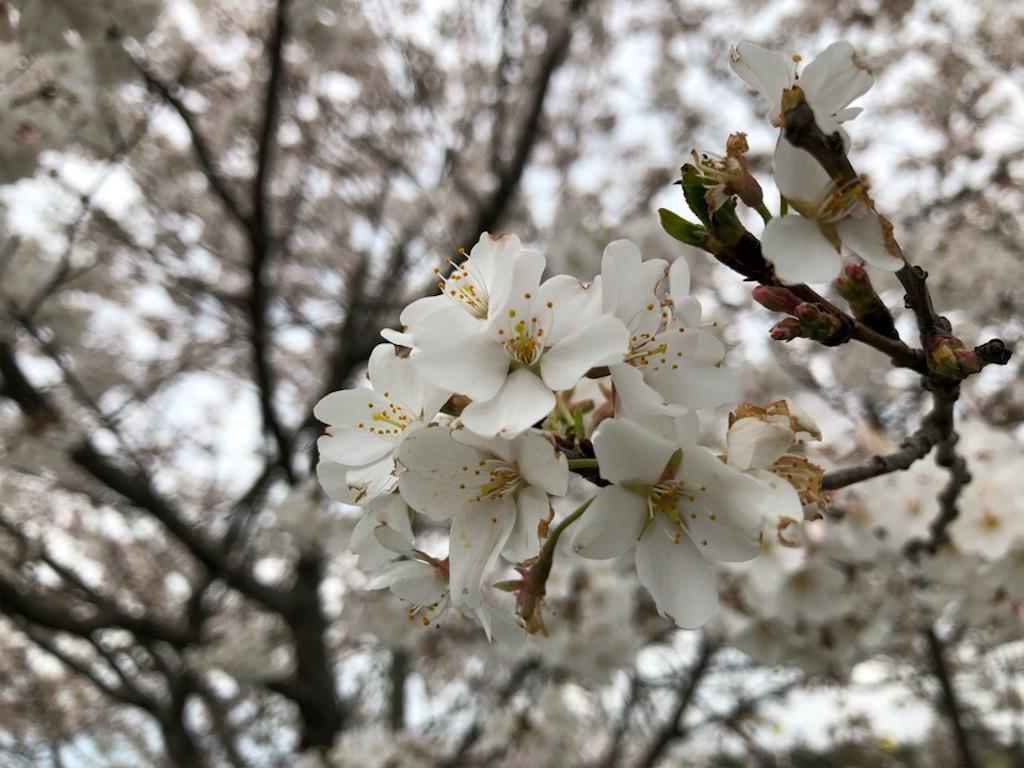 f:id:Toshibo:20190326205629j:image