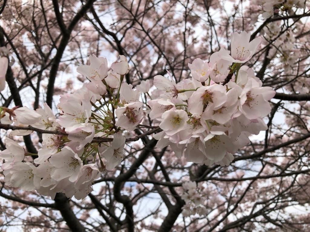 f:id:Toshibo:20200323100354j:image
