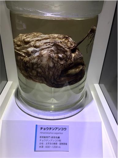 f:id:ToukoFujinomiya:20170902064427j:image