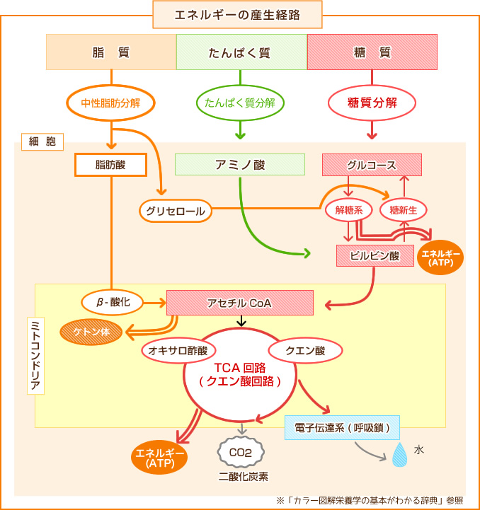 f:id:ToukoFujinomiya:20180103150517j:plain