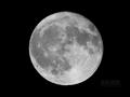 [天体]moon20080619