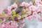 花蜜に夢中なヒヨドリ
