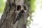 コゲラの巣穴