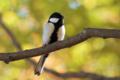 [野鳥]晩秋のシジュウカラ