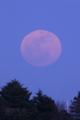 [月景色][風景]歪な月