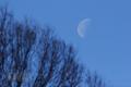 [風景][月景色]冬の弦月