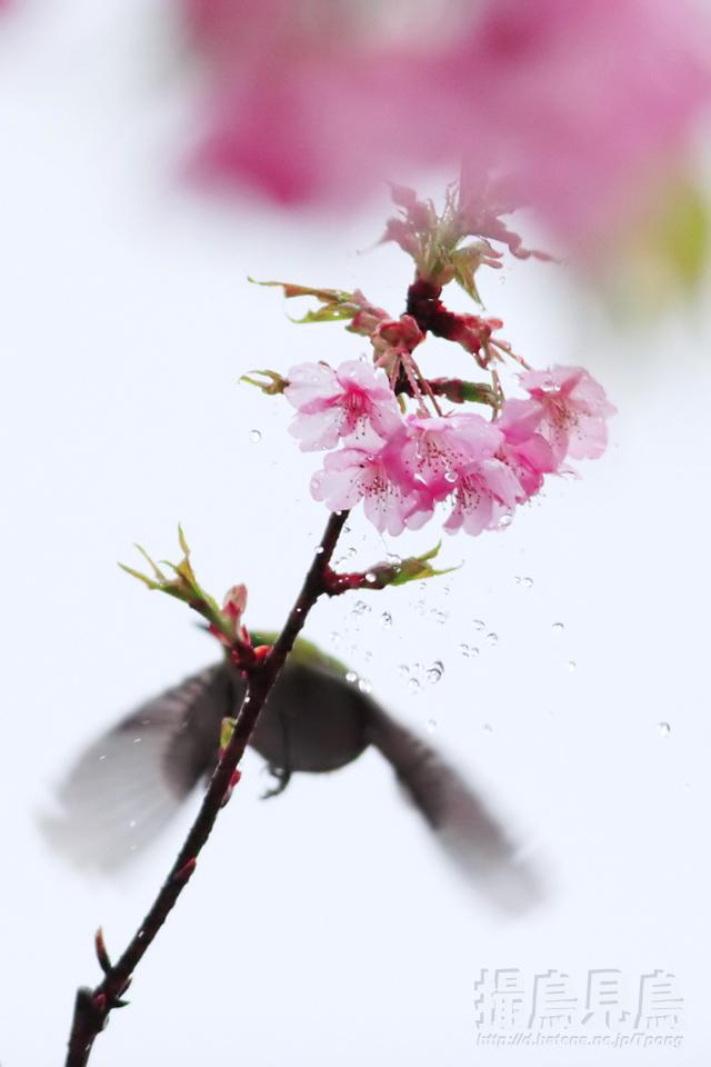 f:id:Tpong:20100308081559j:image:h640