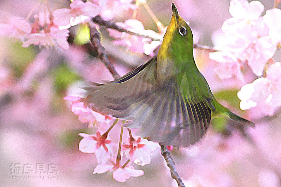 桜下遊鳥図