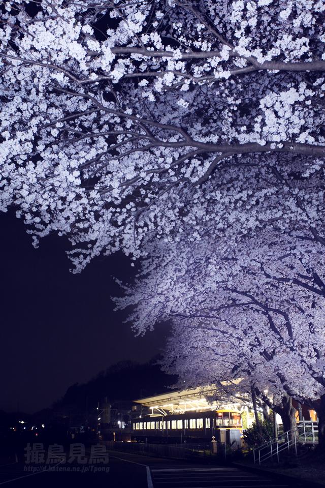 花降る停車場(夜桜2012)