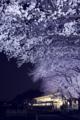 [風景][桜]花降る停車場(夜桜2012)
