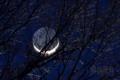 [月景色]冬枯地球照