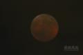 [天体]moon20141008_193219
