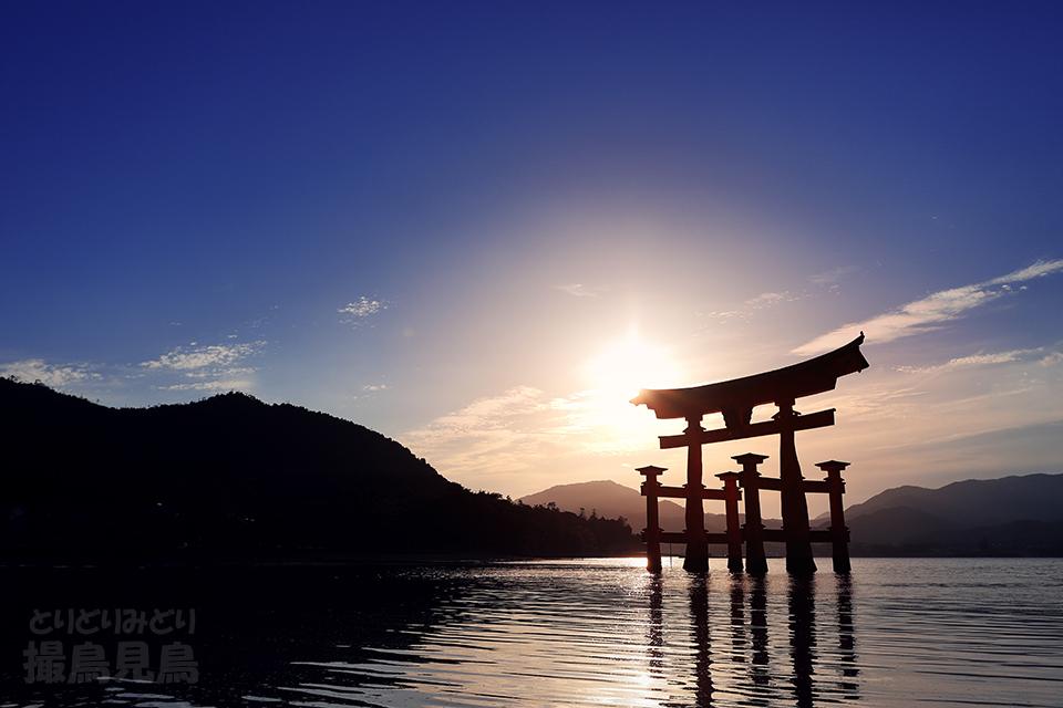 厳島神社大鳥居(満汐)