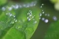 [風景]梅雨の小宇宙