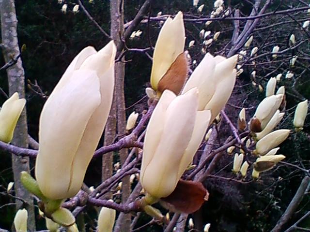f:id:TsuSUZUKI:20120326201216j:image