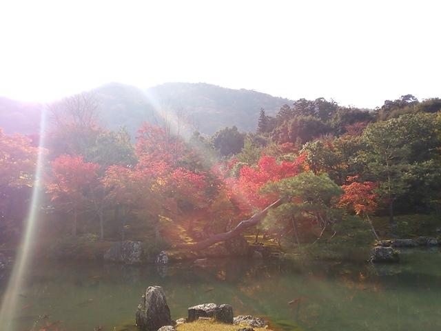 f:id:TsuSUZUKI:20161115112805j:image