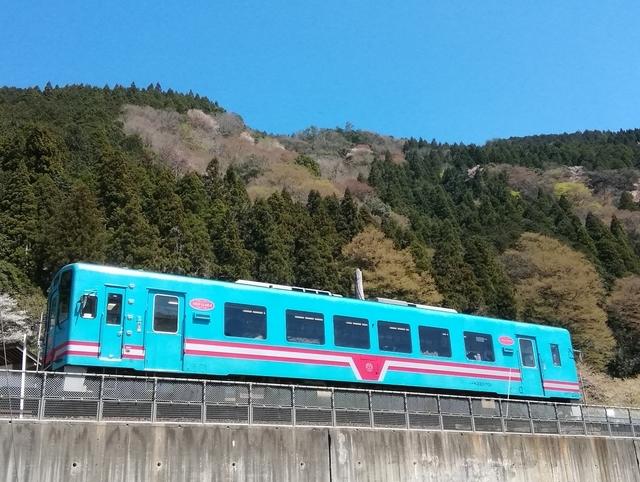 樽見鉄道観桜薄墨桜号はワンマンでディーゼルエンジン