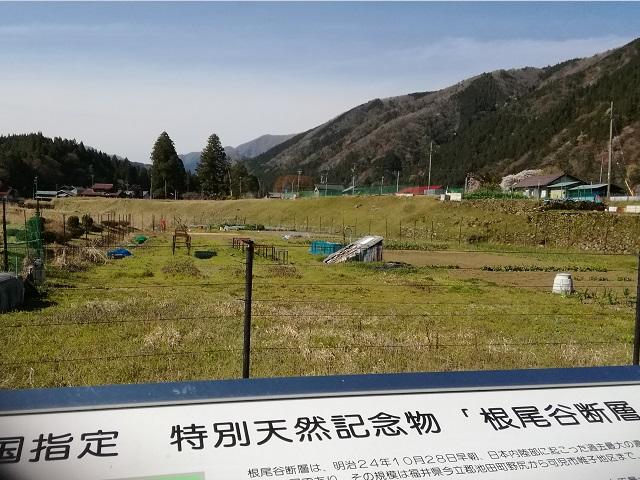 国指定天然記念物根尾谷断層