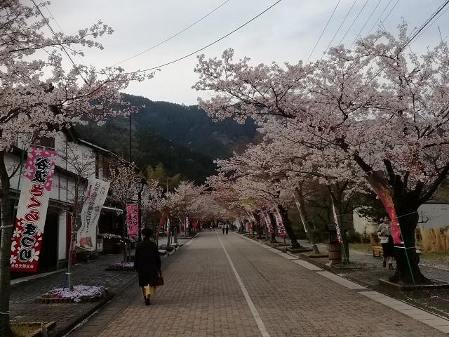 谷汲山華厳寺参道と桜