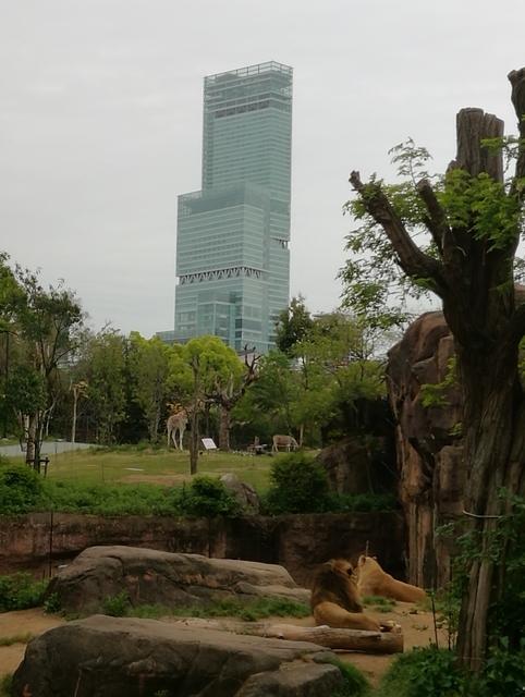 天王寺動物園とアベノハルカス