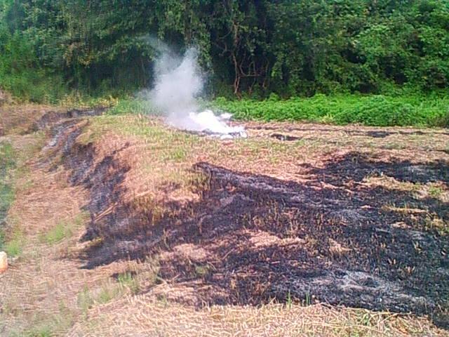 コスモス畑の草刈りと野焼き
