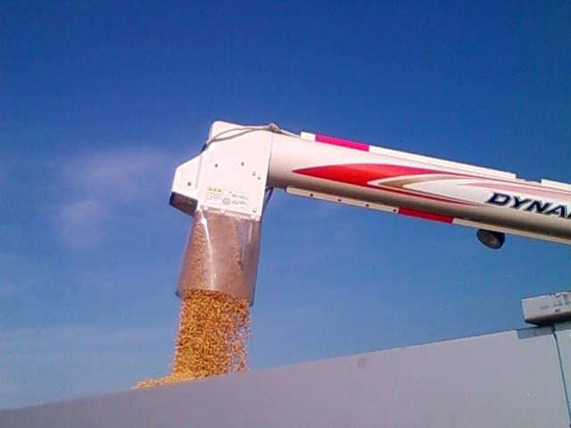 コンテナに籾を入れる