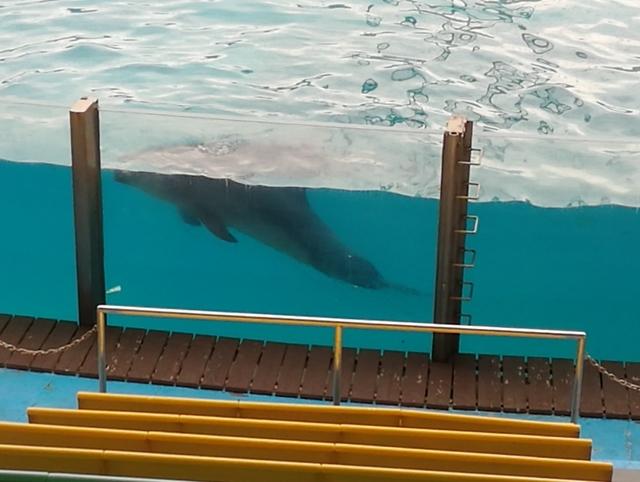 イルカショーのプールで休憩中のイルカ