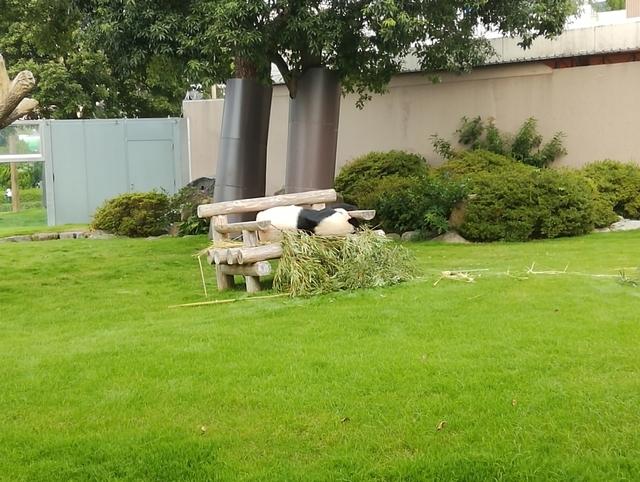 ブリーディングセンターの庭で昼寝中の永明