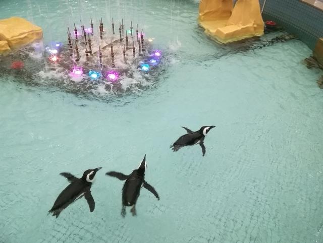 おみやげコーナー脇の通路に噴水があって、そこで泳ぐペンギン