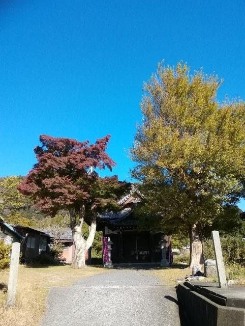 関宿のモミジ