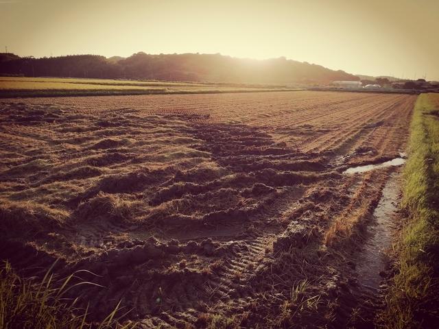稲刈り 2020