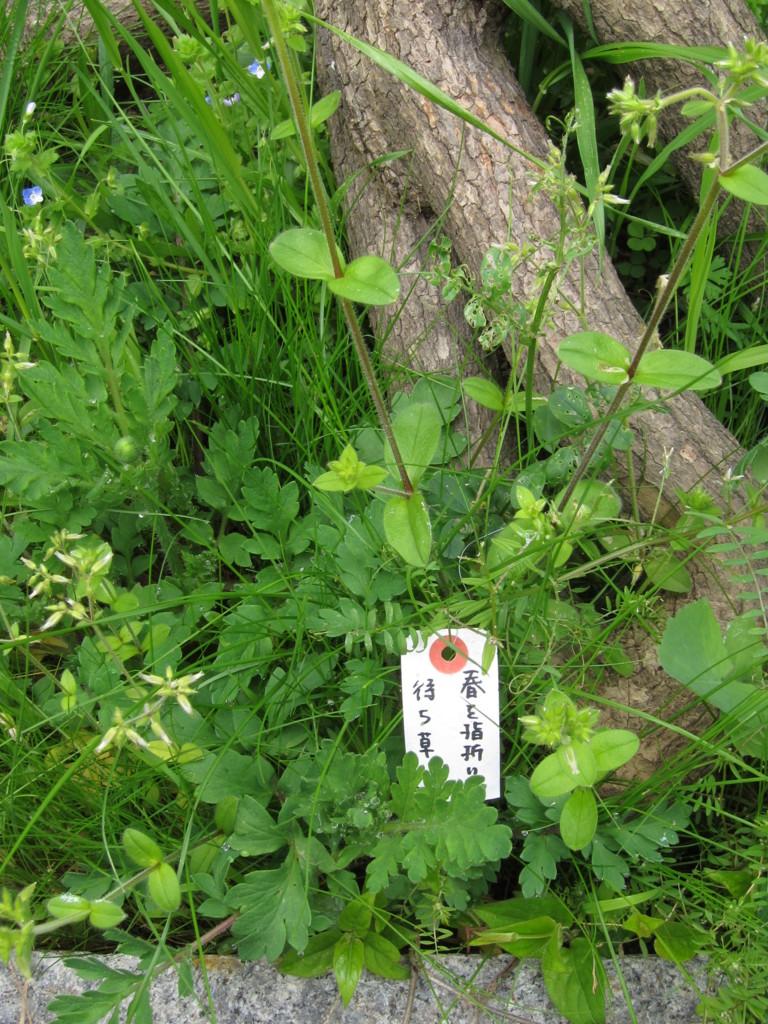 f:id:Tsumura:20160410112436j:plain