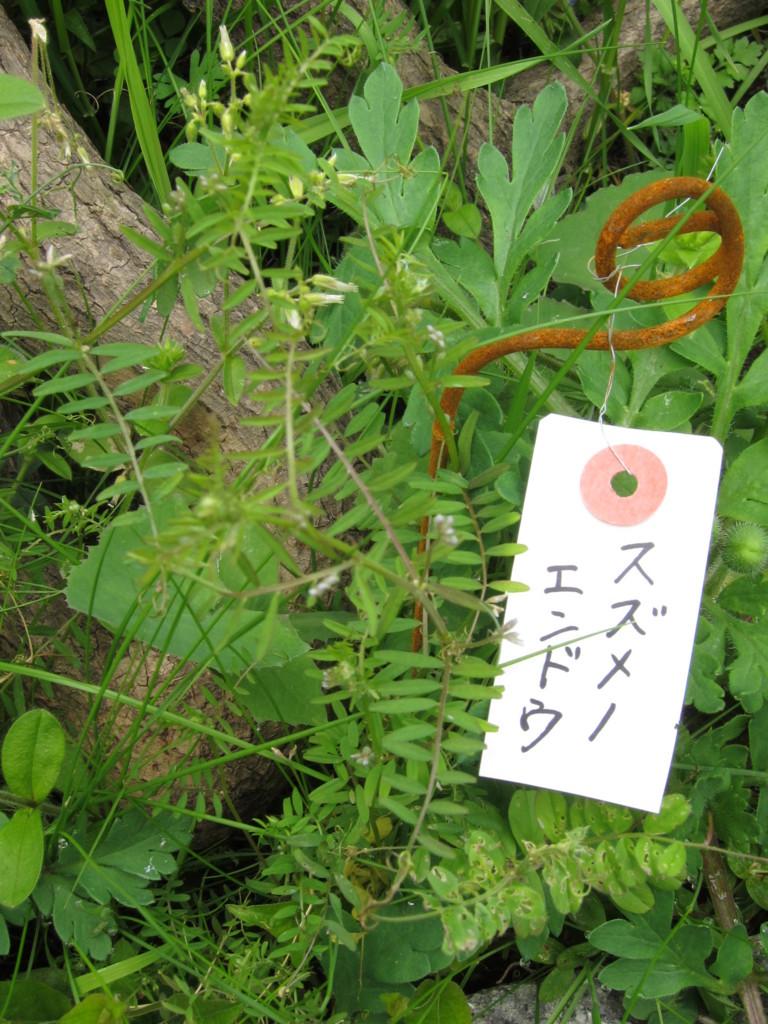 f:id:Tsumura:20160410112558j:plain