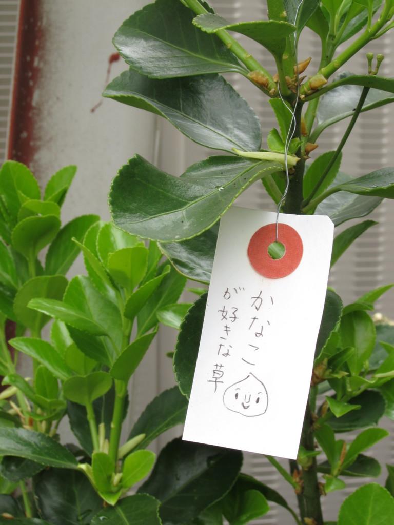 f:id:Tsumura:20160410113123j:plain