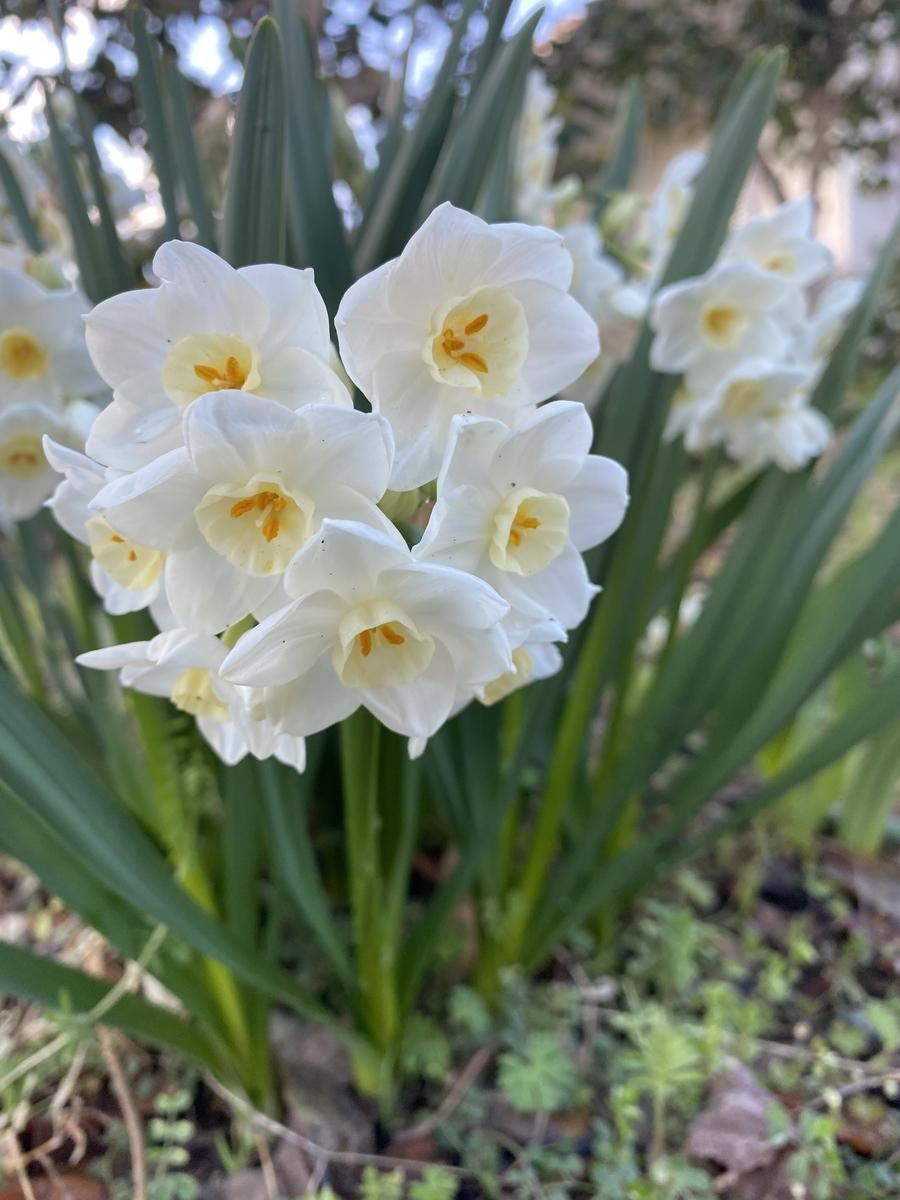 f:id:Tulip01:20210314075209j:plain