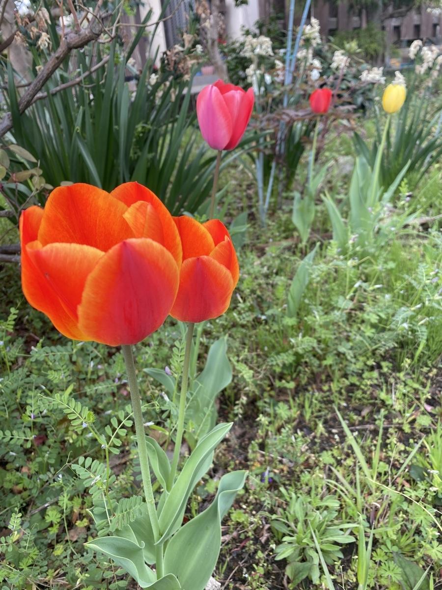 f:id:Tulip01:20210404080247j:plain